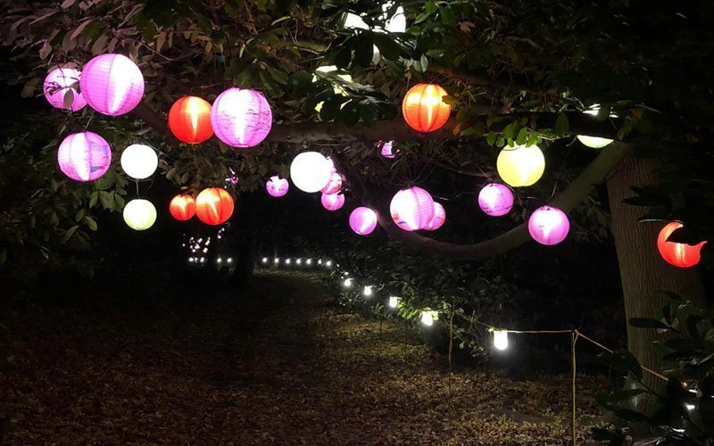 Christmas 2020 at Waddesdon - Illuminated Woodland Trail