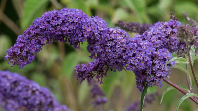 August gardening guide: what to do in your garden this August