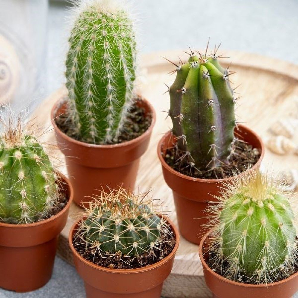 Cactus Collection House Plant Slider Image 02