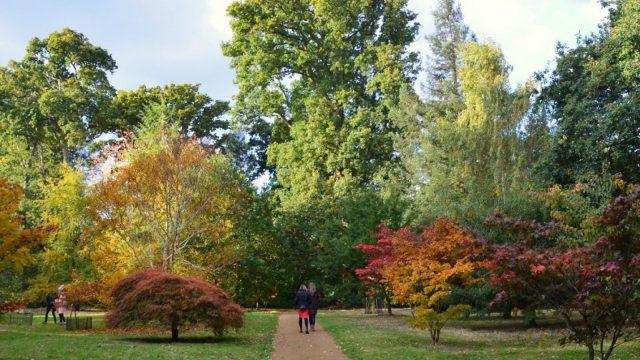 Celebrate Autumn Colour at Harcourt Arboretum