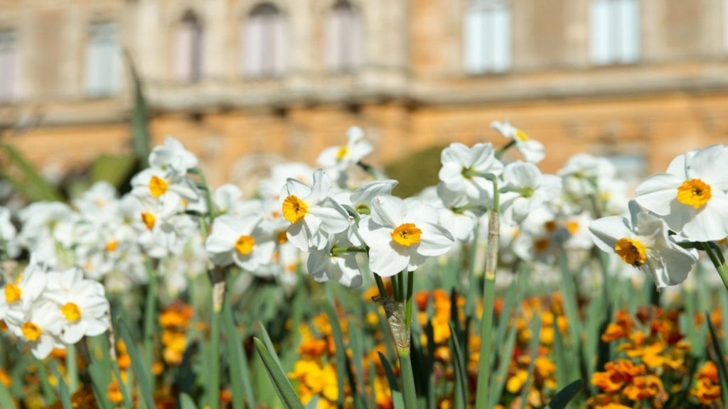 Easter 2021 adventure in nature at Waddesdon