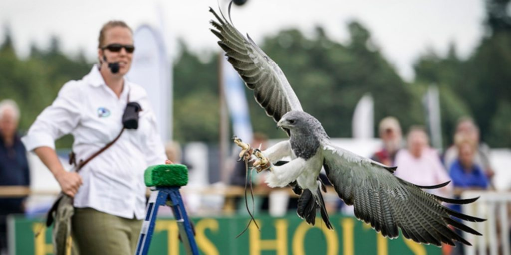 Falconry at The Games Fair