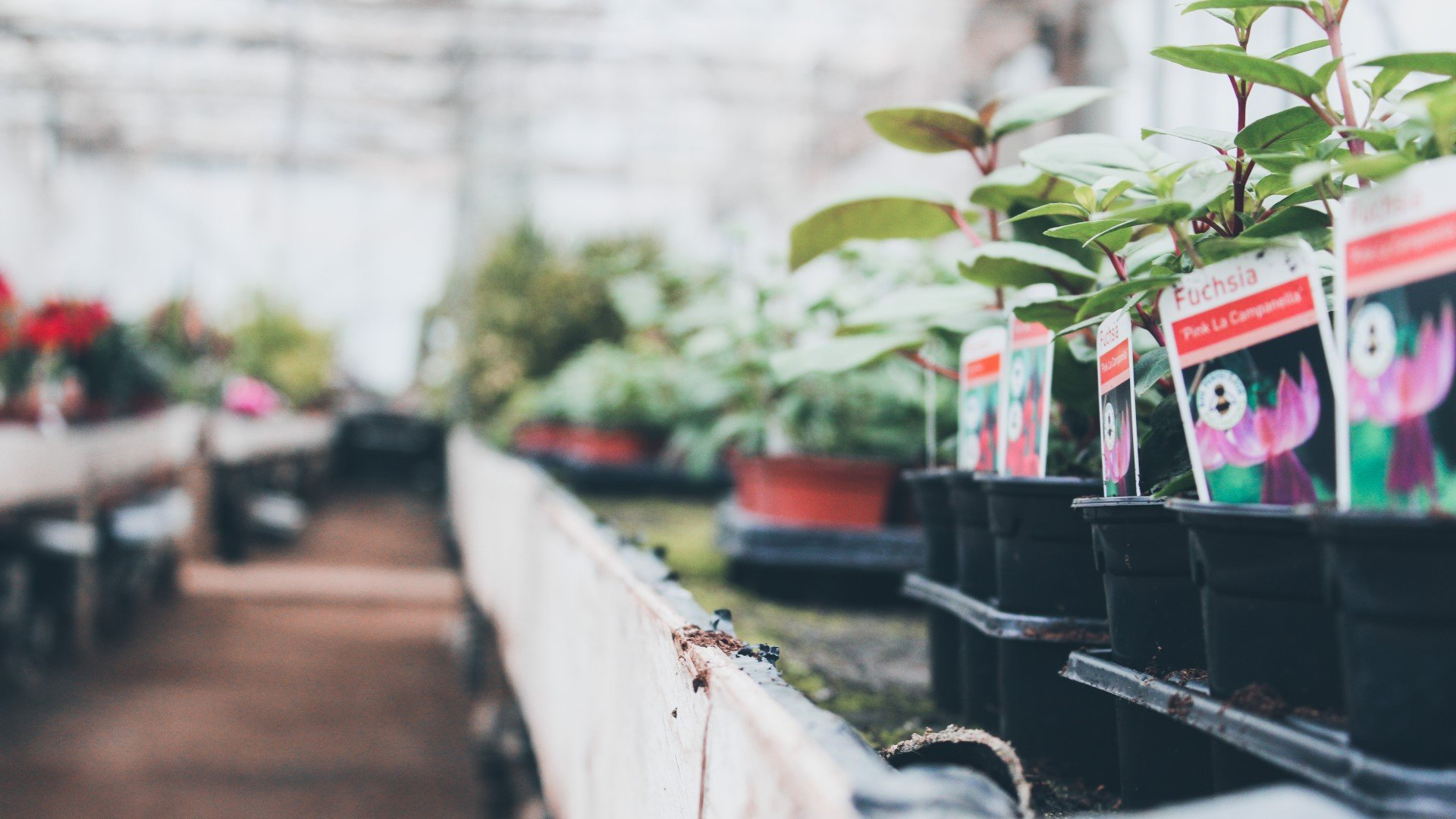 7 great garden centres to visit in Oxfordshire
