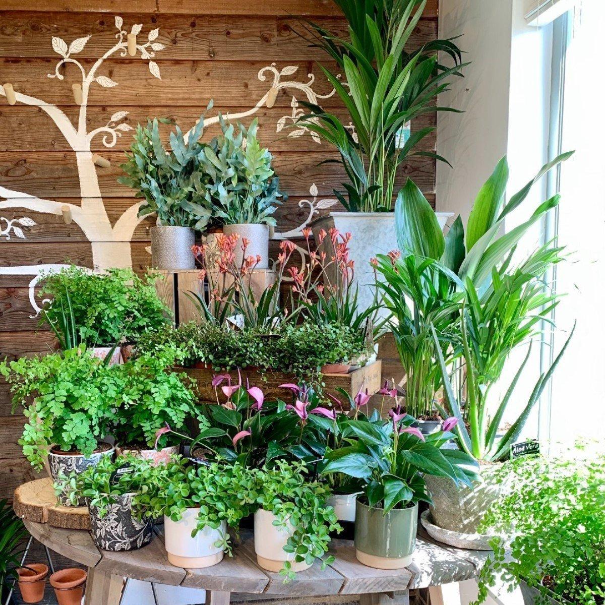 Garden centres to visit in Oxfordshire - Nicholson Nurseries