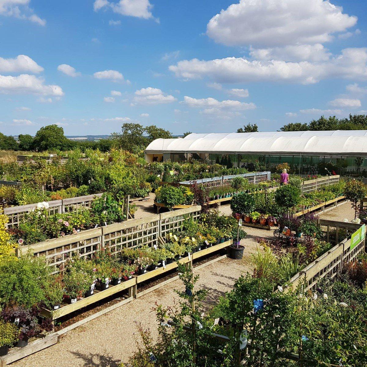Garden centres to visit in Oxfordshire - Root One Garden Centre