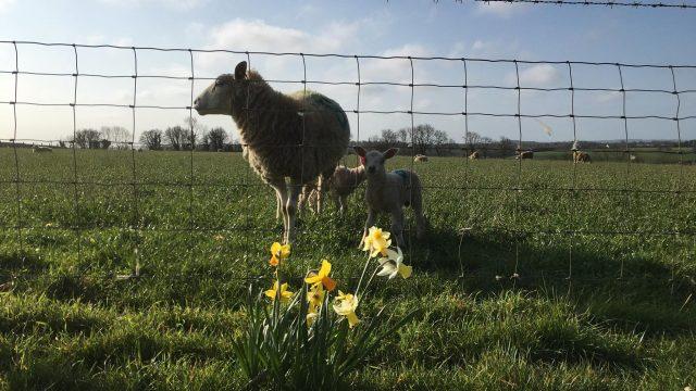 Hadsham Farm, Banbury