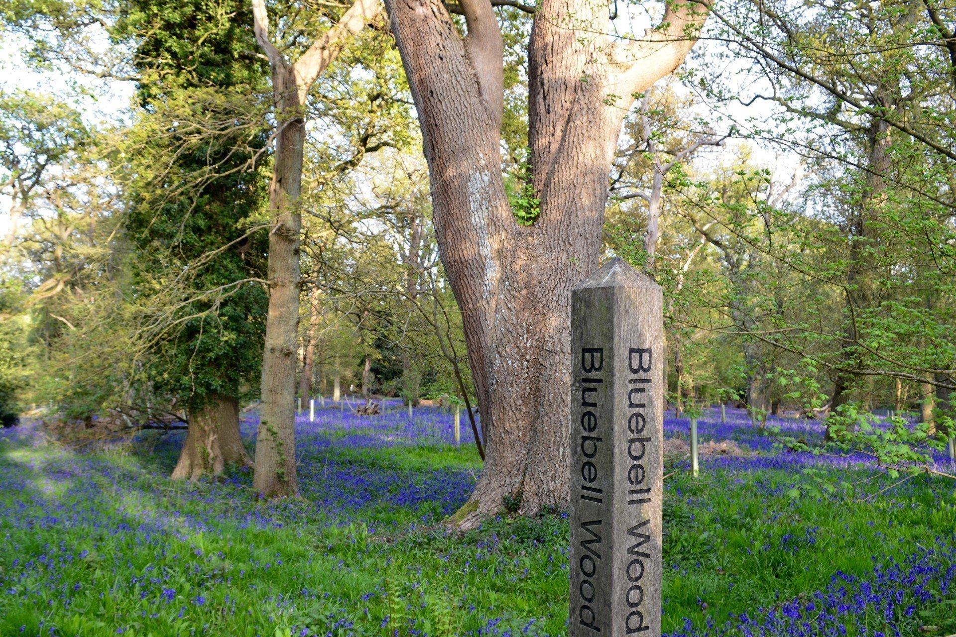 Harcourt Arboretum - Native Woodland