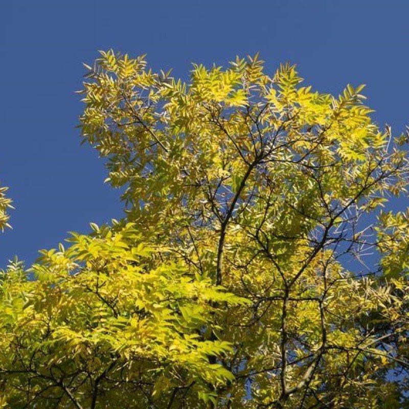 Harcourt Arboretum Opening Hours - November