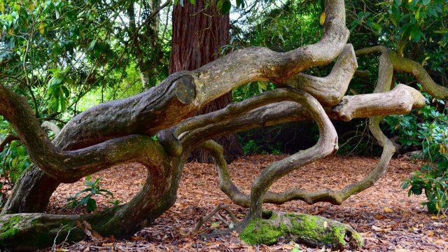 Harcourt Arboretum Oxfordshire