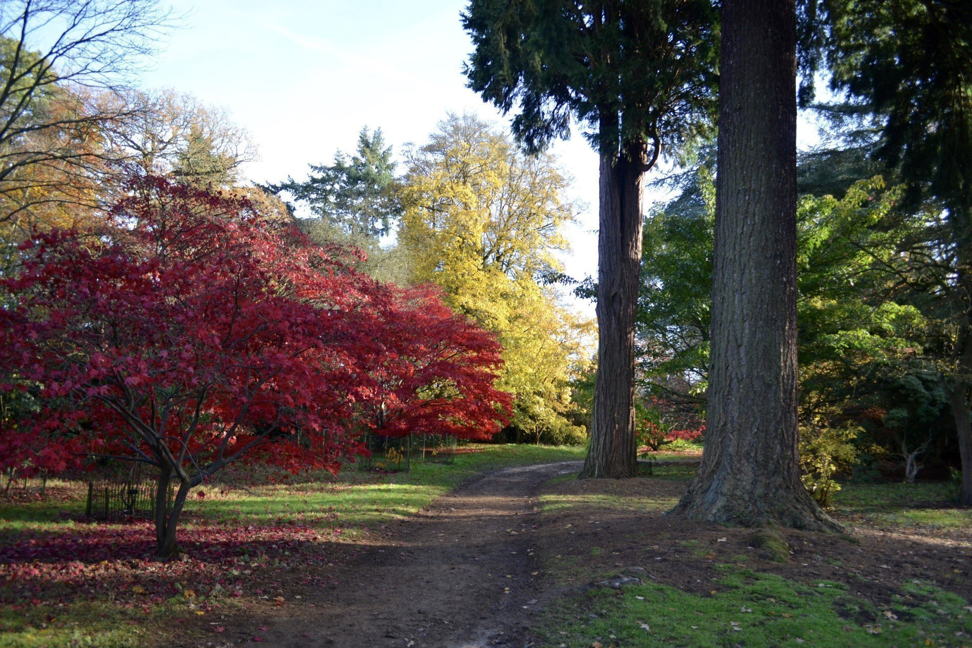 Harcourt Arboretum - The Acer Glade and Coppice