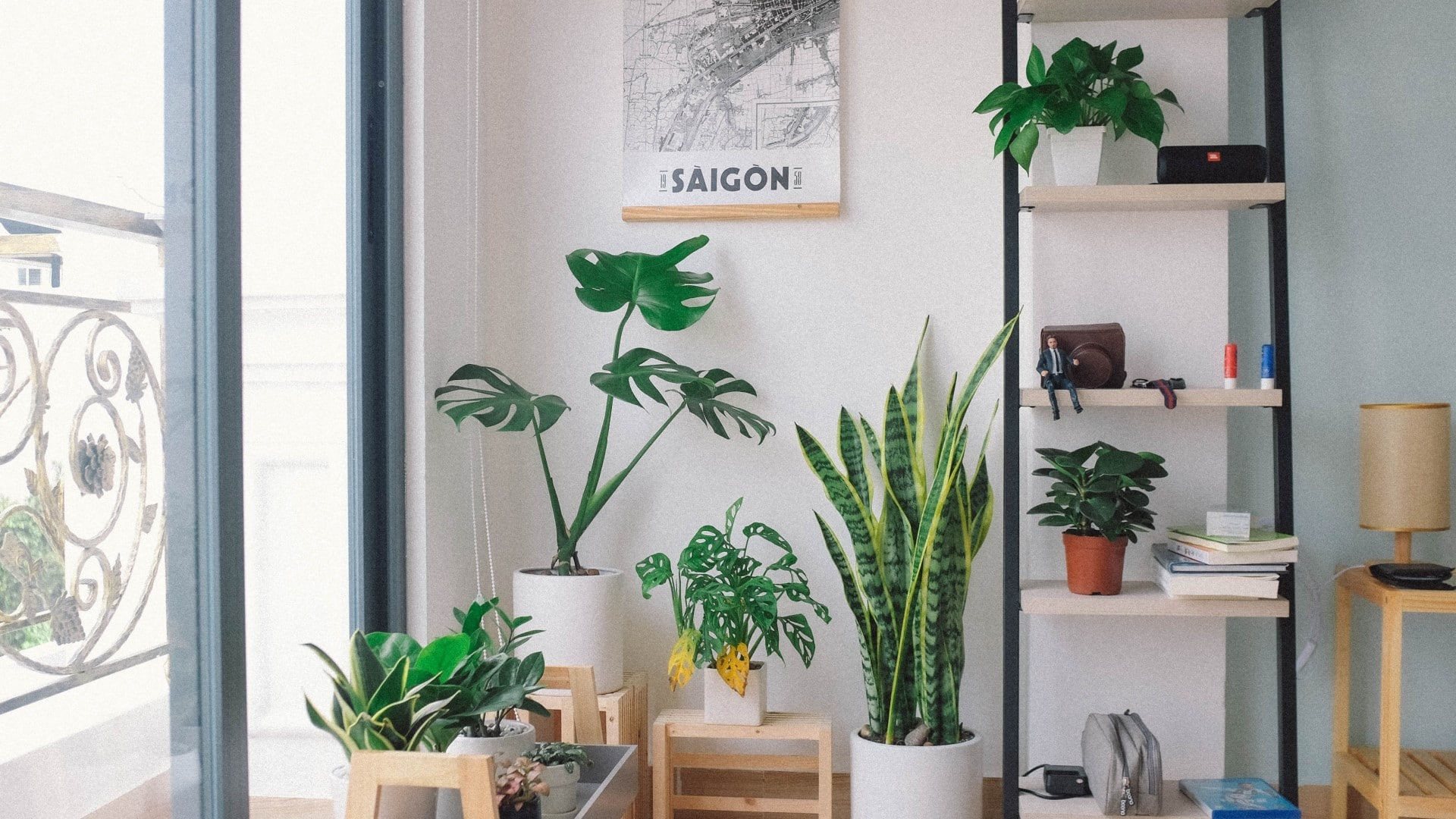 Bring some calm and greenery into your home with these houseplants