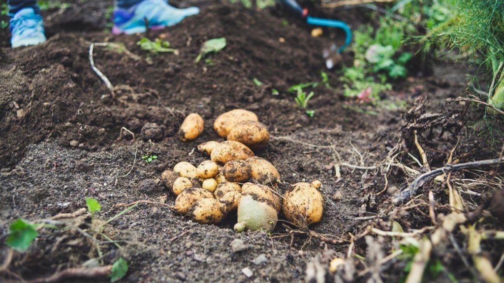 July gardening guide: Harvesting