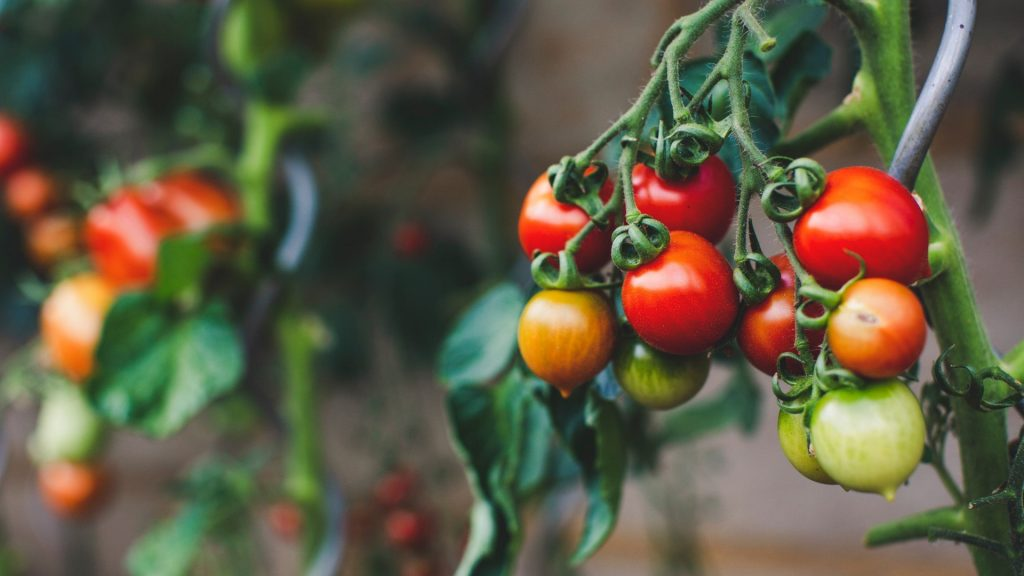 July gardening guide: Care and maintenance