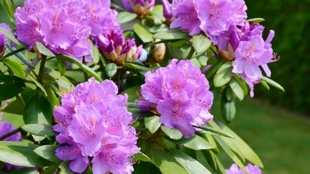 June gardening guide: what to do in your garden this June