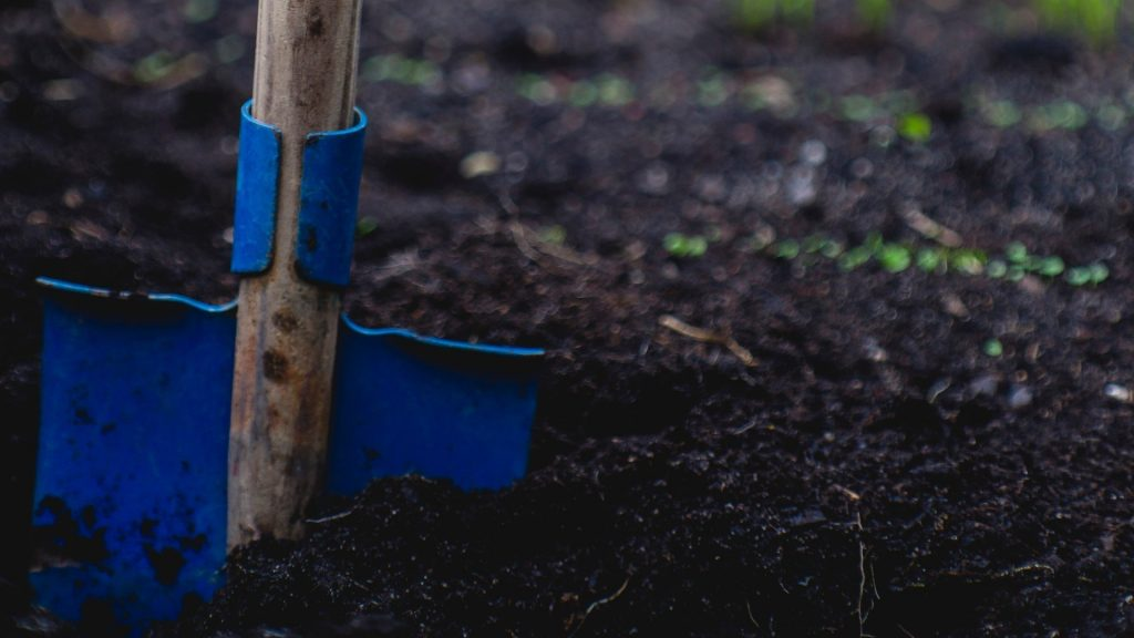June gardening guide: Care and maintenance