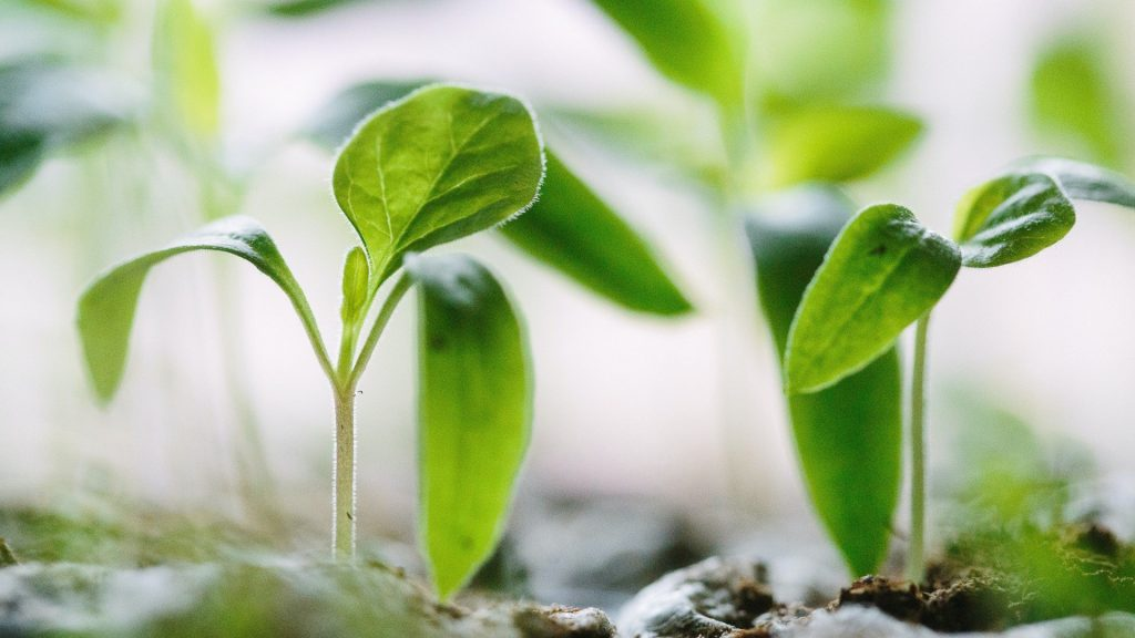 June Gardening Guide: Planting