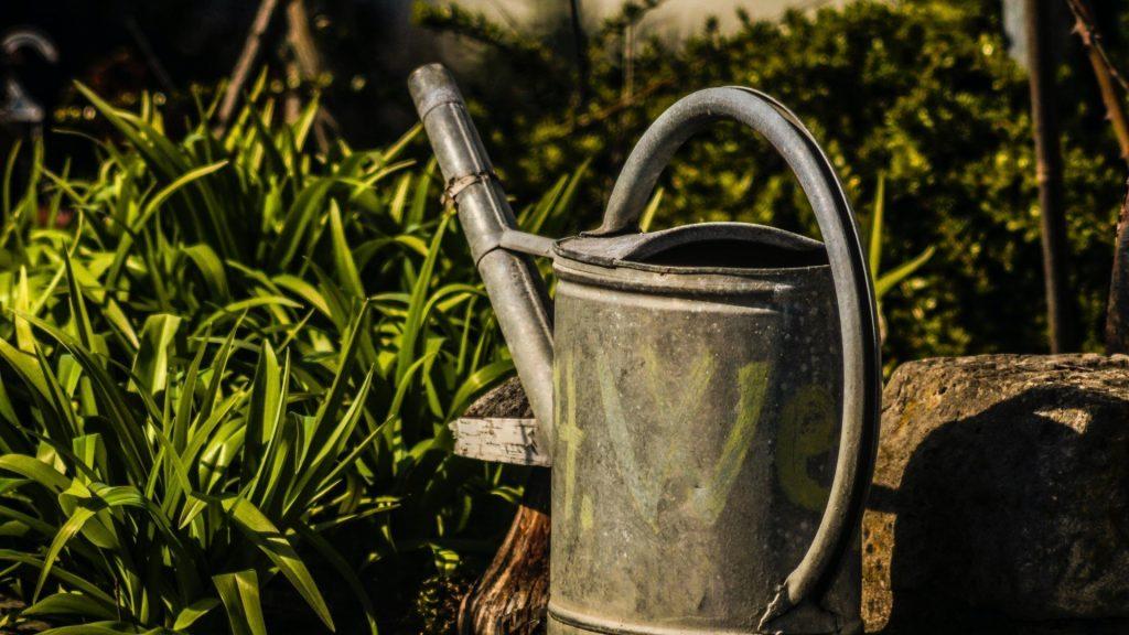 June gardening guide: Other garden tasks for June