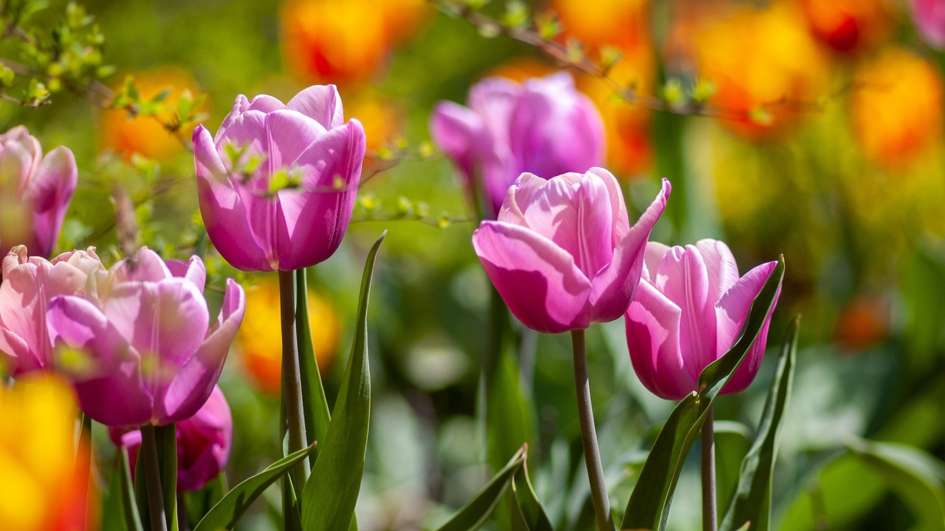 May gardening guide: what to do in your garden this May
