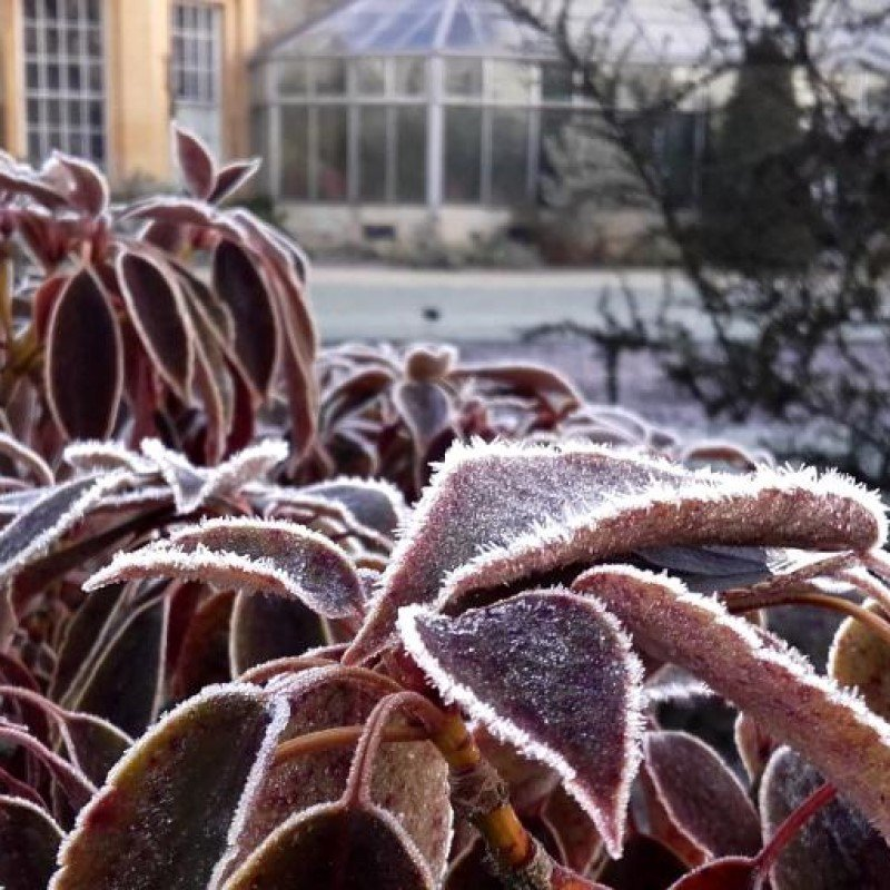 Oxford Botanic Garden Opening Hours - November to February