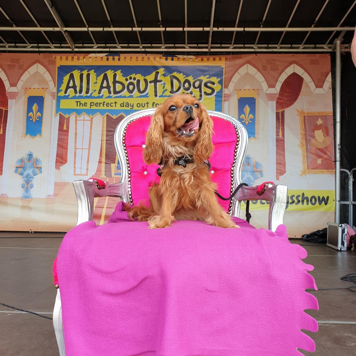 Paws at the Palace - Gallery Image 03