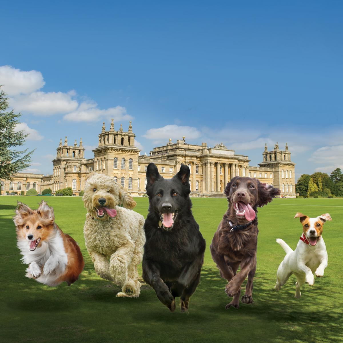 Paws at the Palace - Gallery Image 04