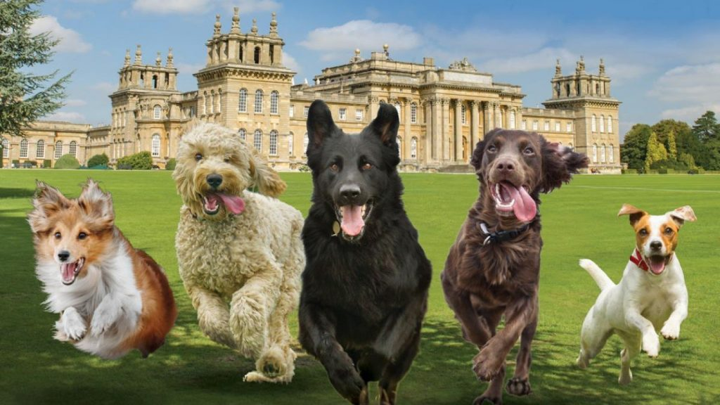 Paws at the Palace 2021