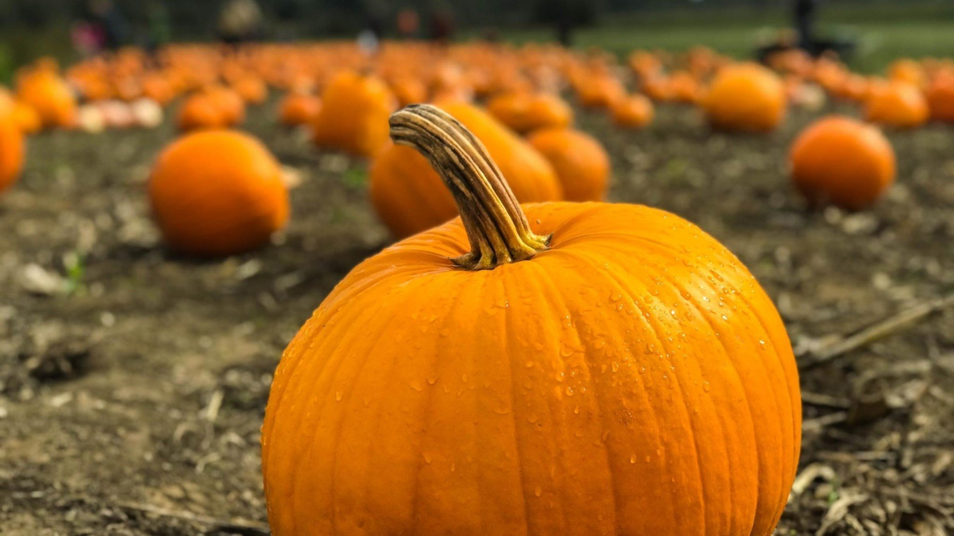 Pick your own pumpkins in Oxfordshire