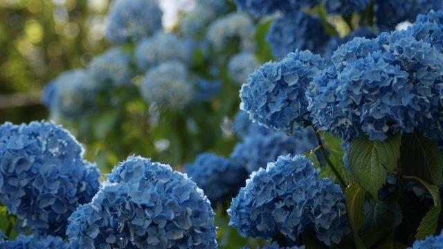 September gardening guide: what to do in your garden this September
