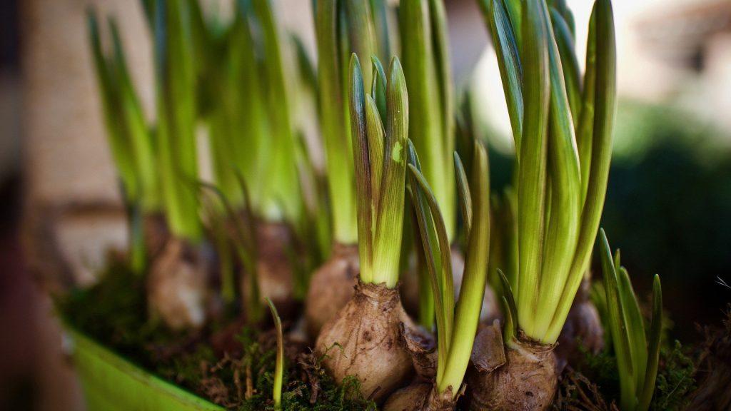 September gardening guide: Planting