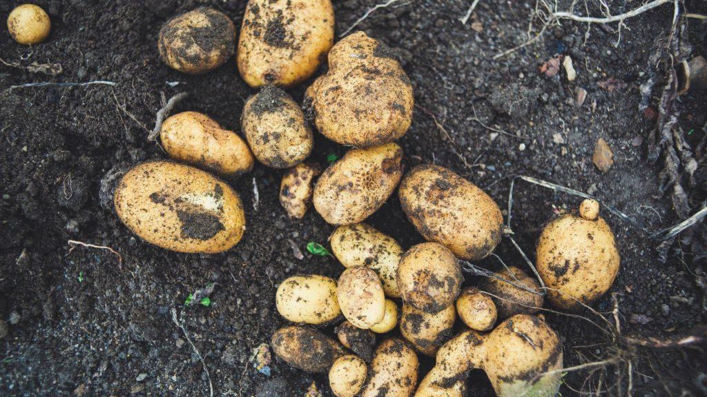 September gardening guide: Harvesting