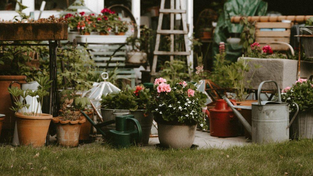 September gardening guide: Other garden tasks for September