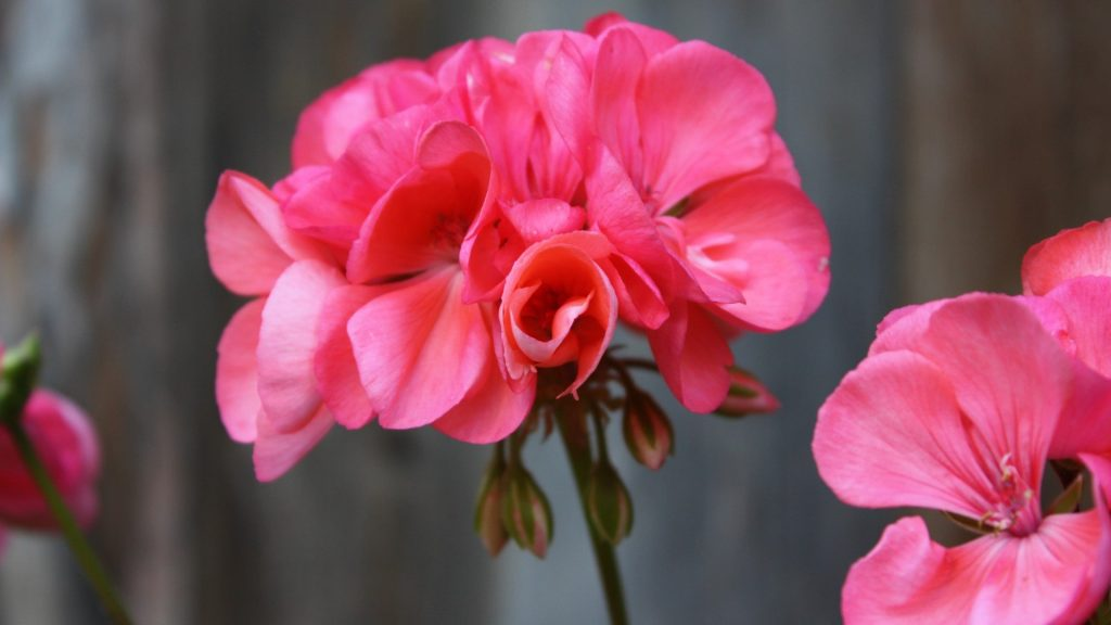 September gardening guide: Care and maintenance
