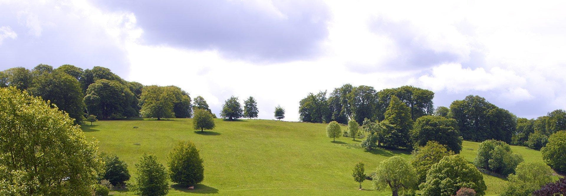 Stonor Park Oxfordshire - Parkland