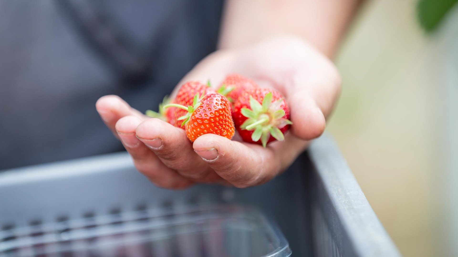 Strawberry picking farms in Oxford and Oxfordshire.