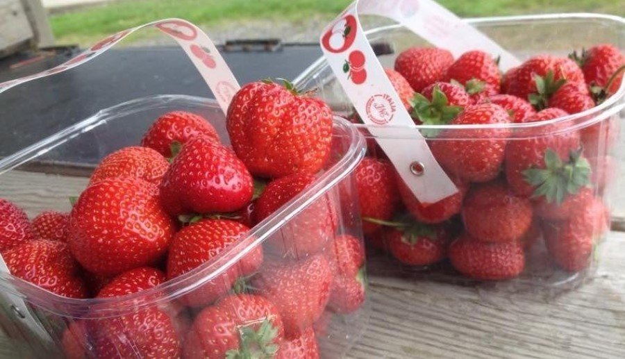 Pick-your-own strawberry farms in Oxford and Oxfordshire.