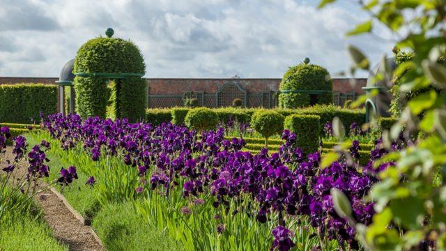 Thenford Gardens & Arboretum Garden Open days