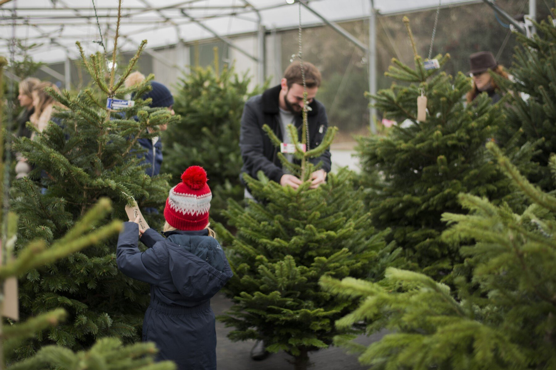 where to buy fresh-cut Christmas trees in Oxfordshire