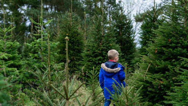 Here's where to buy fresh-cut Christmas trees in Oxfordshire