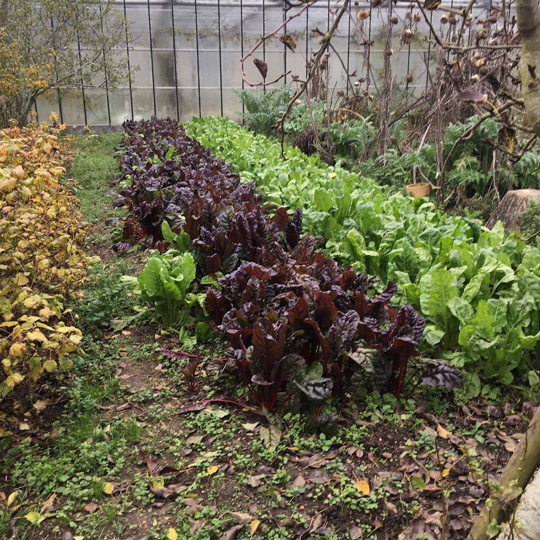 Worton Kitchen Garden, Cassington, West Oxfordshire - Image Gallery 04