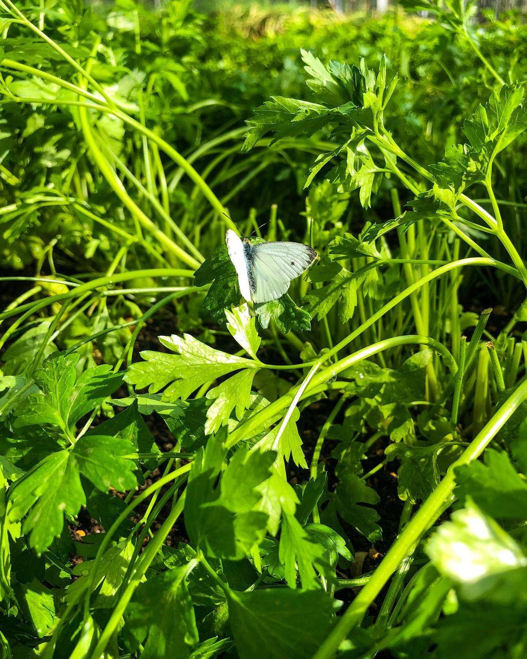Worton Kitchen Garden, Cassington, West Oxfordshire - Image Gallery 07