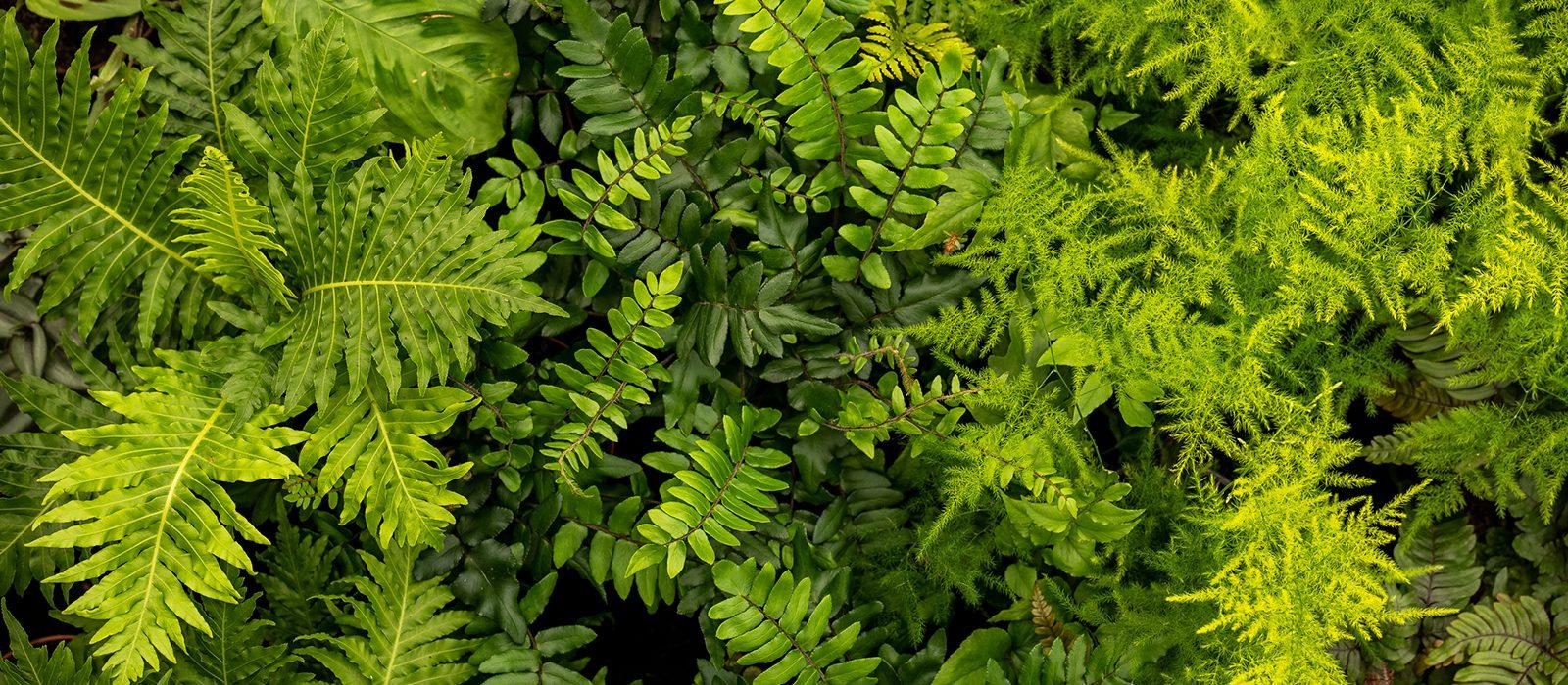 Yarnton Home & Garden, Kidlington, Oxford - Plants for Sale